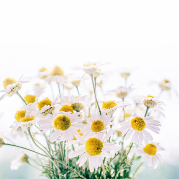 Wiosenne żółte kwiatki na białym tle.